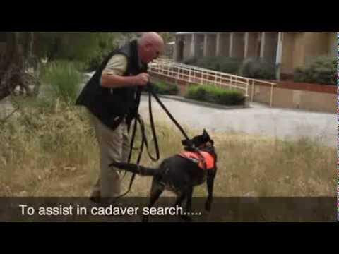 Search Dogs Australia (Inc.) - 2013 Search And Rescue