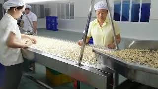cashew nut processing machine /whole processing line cell: 008613939083462