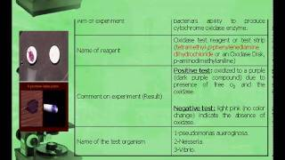 Biochemical tests of bacteria