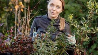 rośliny zimozielone do ogrodu ,na taras i balkon