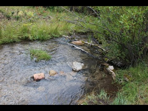 Palace Gold 20 Acre Placer Mining Claim on Trout Creek Montana