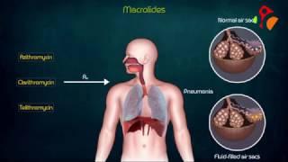 Macrolides Antibiotics Animated presentation- Mechanism of action , Kinetics , Resistance