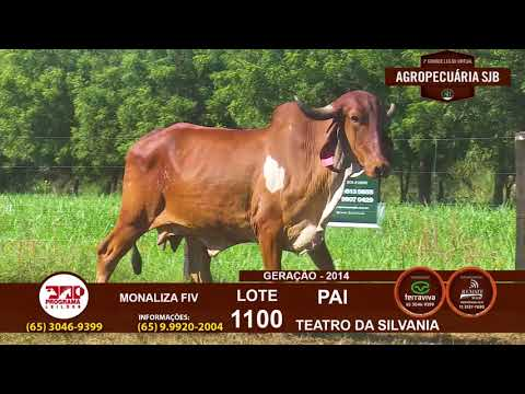 LOTE 1100