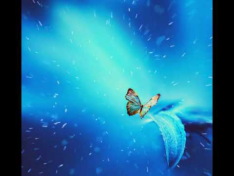 Beautiful Butterfly With Animated Background Animation Video