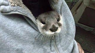 Otter Aty goes! Enjoy the nature of Hakushu Part Ⅲ[Otter life Day 138] カワウソアティがゆく!白州の自然を満喫する旅 Part Ⅲ