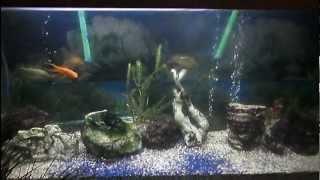 Acuario de (720 lts) con peces de agua fria