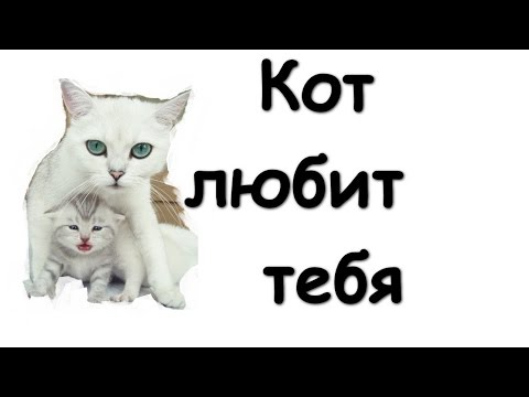 Смешные картинки: Кот любит тебя #55