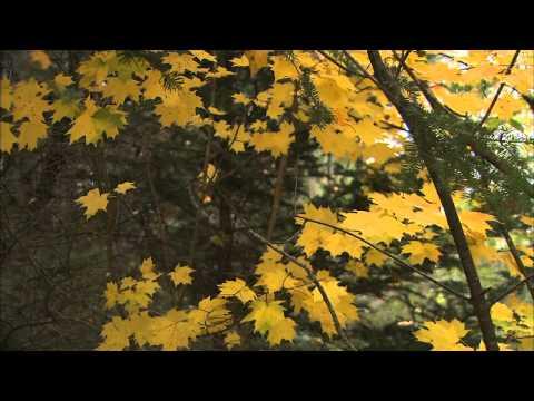 Микаэл Таривердиев - Осень