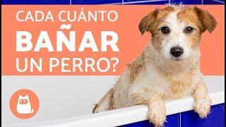 ¿Cada cuánto se debe bañar a un perro?