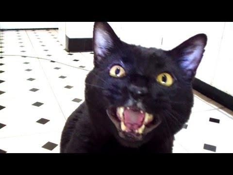Talking Kitty Cat 26 – No Pets Allowed