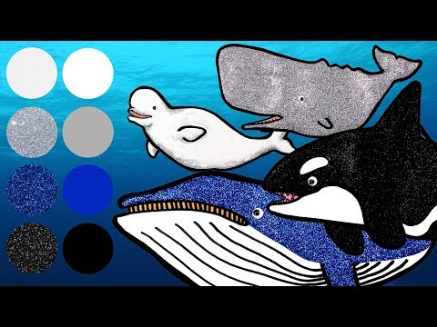 Best Whale Awards   Sea Animals for Kids   Killer Whale, Sperm Whale, Blue Whale, Beluga