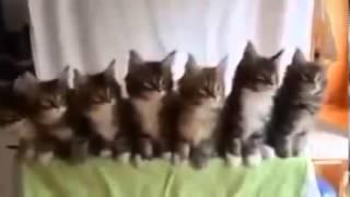 Копия видео Коты танцуют под музыку! Котосмех