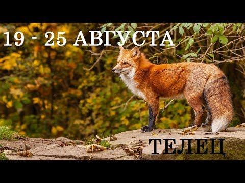 ТЕЛЕЦ Таро прогноз 19 АВГУСТА - 25 АВГУСТА Онлайн гадание