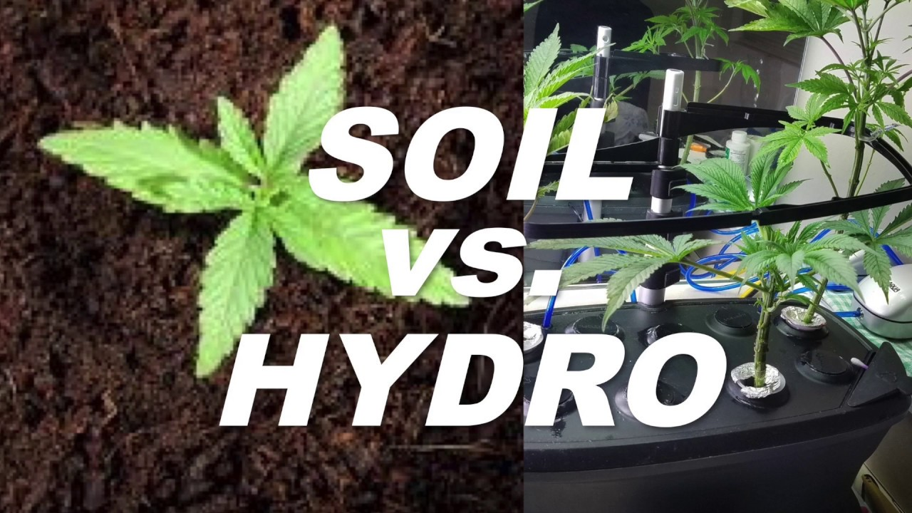 Ordinaire Soil Vs Hydro   Whatu0027s The Best Way To Grow Weed? By Cannabis Frontier