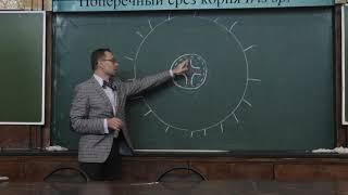 Зернов А. С. - Высшие растения - Строение, заложение корня