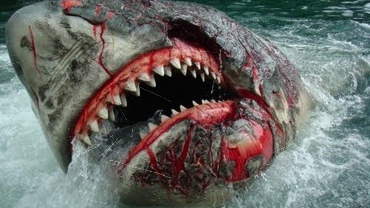 tiburones m225s peligrosos y agresivos top 10 youtube