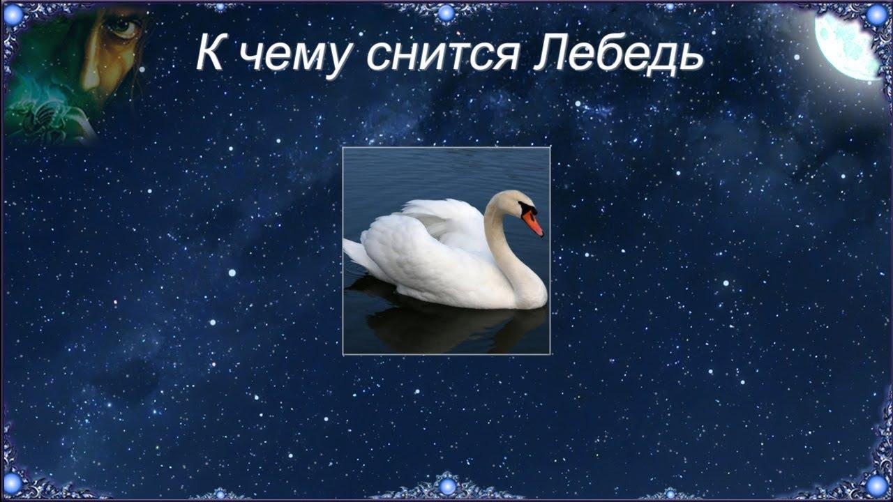 К чему снится Лебедь (Сонник)