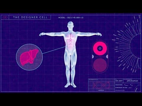 Der Mensch als Schöpfer - Die Gen Revolution - Doku Deutsch 2018 HD