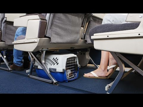 Download Youtube: China's HainanAirlines allows pets to travel in-cabin
