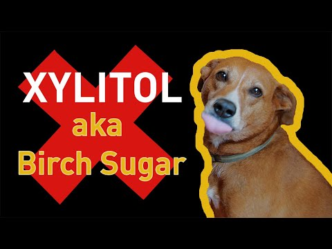 FDA Warns Your Dog Can Die From Xylitol—Popular Sweetener Found in Food, Chewing Gum, and More