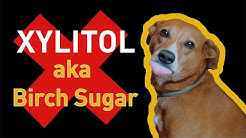 Xylitol and Dogs, A Deadly Combination