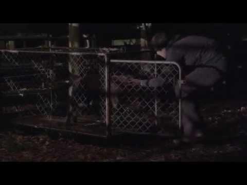 Play Dead (NZ Short Film)