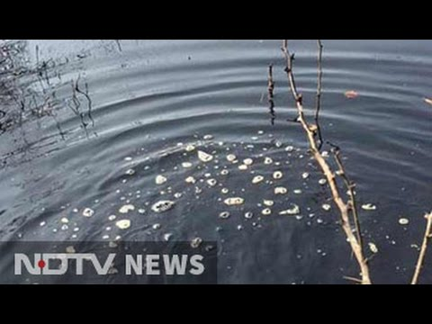 Toxic pond threatening water supply near Delhi