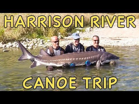 Harrison River Canoe/Kayak Trip - Fraser Valley BC
