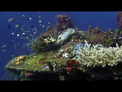 Bali Dive Safari - Amed & Tulamben