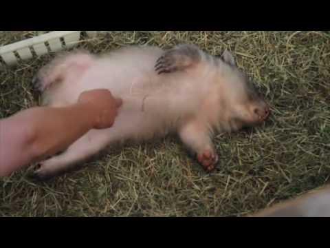 Amazing Baby Wombat