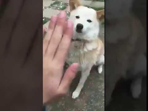 飼い主「お手」イッヌ「しゃーないな」
