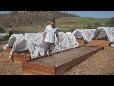 Growing Moringa: Intensive Moringa Cultivation - Planting