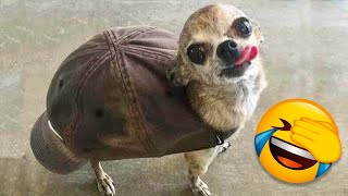 The Best Funny Videos Of Dogs And Cats 😹🐶 - Funniest Animals Compilation 🤣