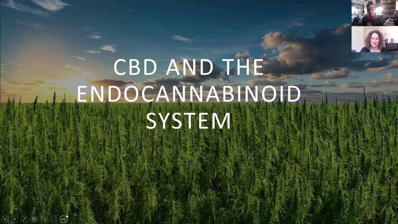 The Endocannabinoid System and How CBD Can Support It