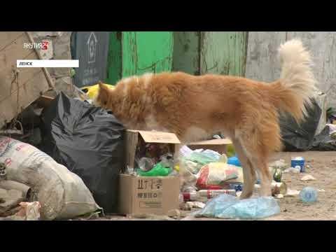 ЛЕНСК: Ленчане недовольны работами по вывозу мусора
