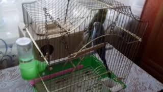 Самодельные гнездо для волнистых попугаев