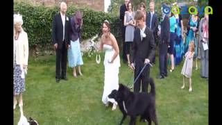 Свадебные приколы драка на свадбе