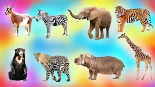 Learning Animal Name in the Zoo / Educational video for children