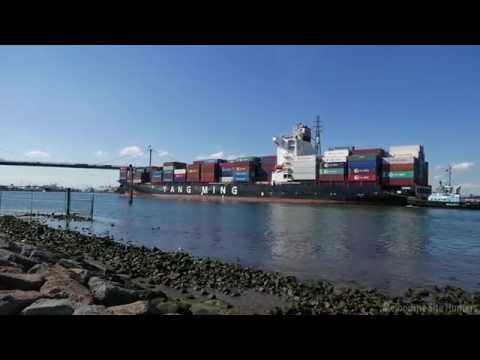 Yang Ming Cargo Ship Approaching Port of Melbourne | Sail Under West Gate Bridge