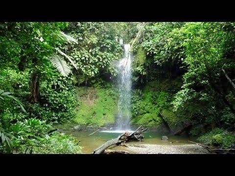 Reserva Natural Bosque del Yotoco - TvAgro por Juan Gonzalo Angel
