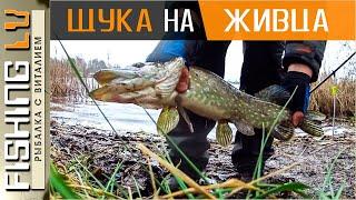 ЛОВЛЯ ЩУКИ на ЖИВЦА в ДЕКАБРЕ Зимняя рыбалка на ЩУКУ Līdaku cope ziemā