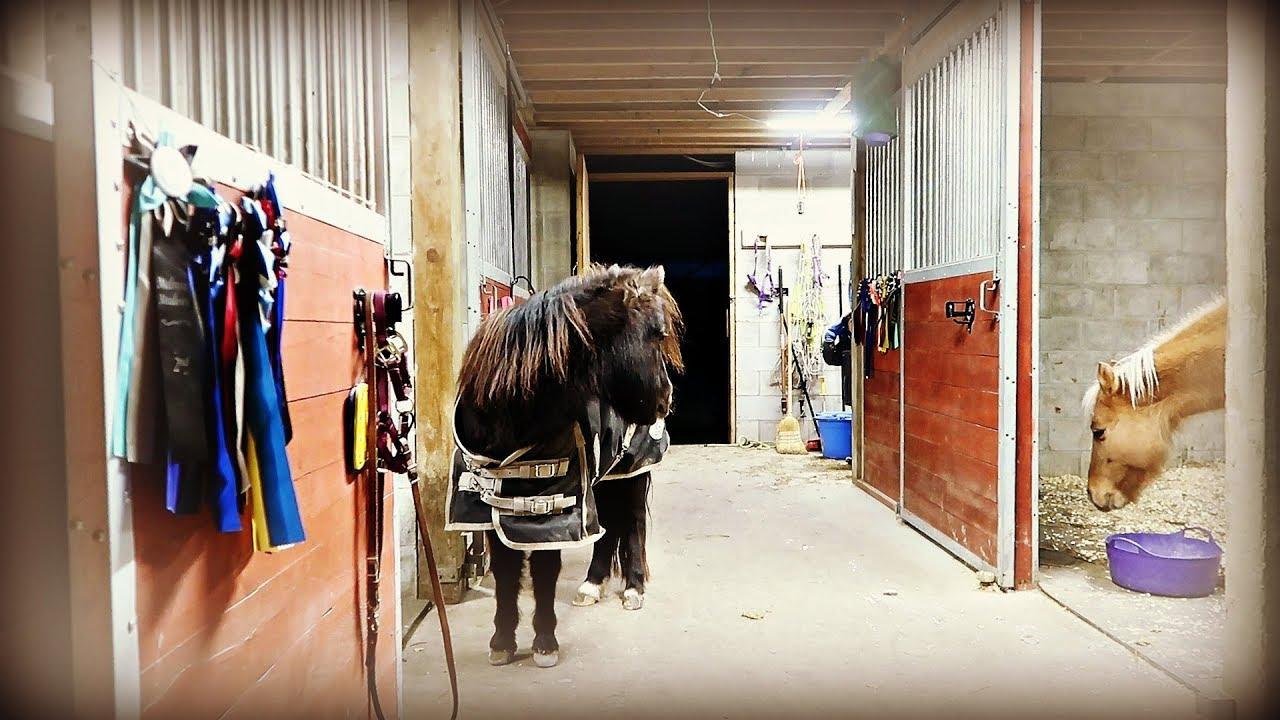 双人旁走_ALL OUR HORSES ARE CRAZY! Day 021 (01/21/20) - YouTube
