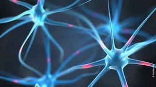 Bewusstsein + Gehirn + Gefühle + Nervenzelle + Botenstoff