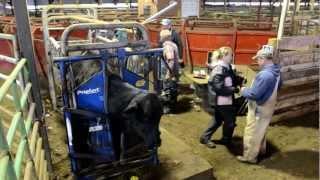 Allflex Livestock Logger III Market Demo