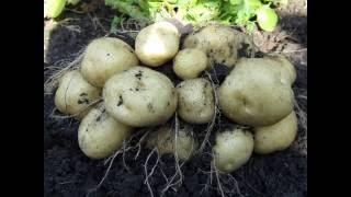 Дом, сад, огород. Советы по выращиванию овощей.