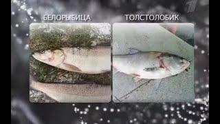 Среда обитания. Рыбный день