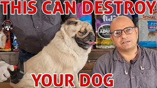 This Can Destroy Your Dog   BIG MISTAKE  Poor Condition   Dog Care & Grooming   Baadal Bhandaari