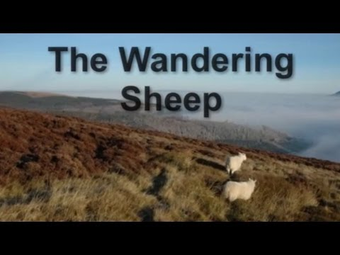 Jesus's parable of the Wandering Sheep