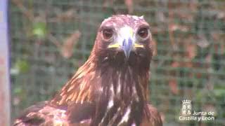 Centros de Recuperación de Animales Silvestres de Castilla y León thumbnail