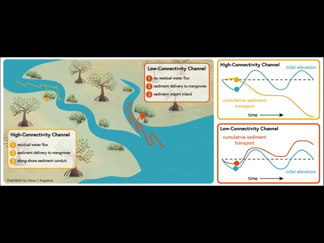 Mangrove Forest Graphical Abstract